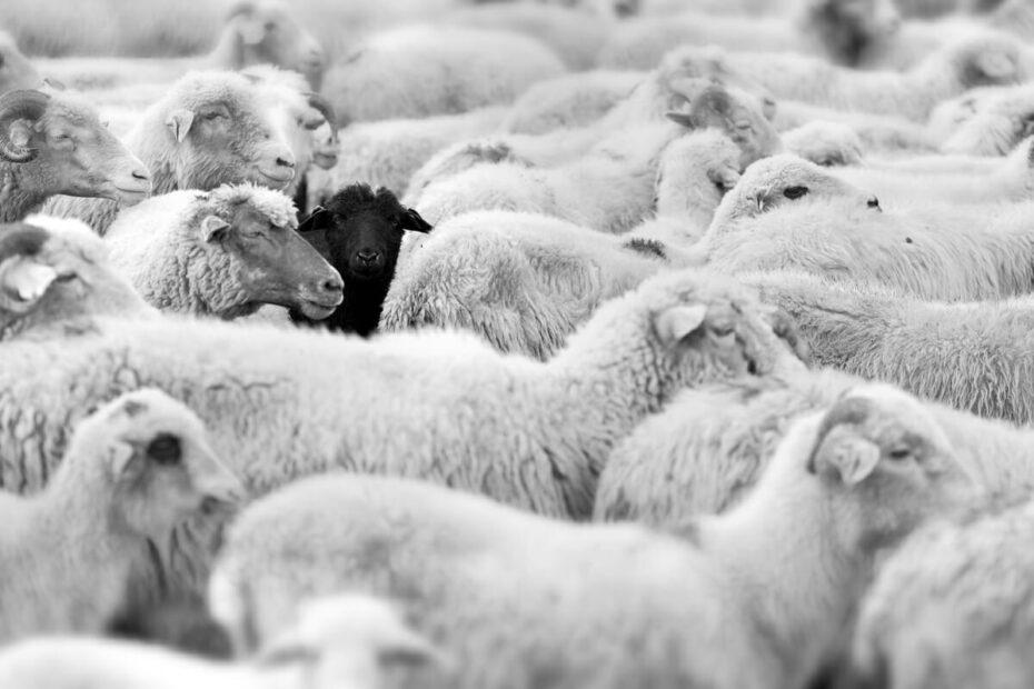 oile negre